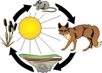 Energy flows through the food chain.